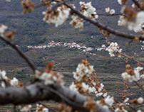 2018 Valle del Jerte