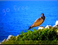 PeDRo PRaTeS - go free   [2012]