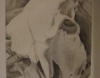 Shadowed Cow Skull