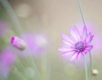 Purple mist in my mind