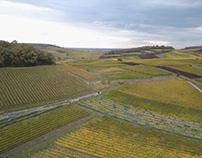 Schutz der Biologischen Vielfalt im Weinbau in Europa