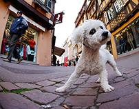 Dogs of Colmar