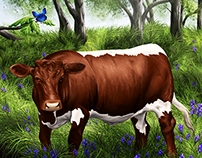 wild cow