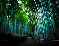 Bamboo Forest of Arashiyama, Kyoto
