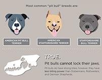 Pit Bulls Misunderstood