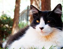 Cats en el Botánico