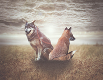 Fox & Wolf