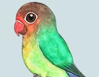Cute lovebird