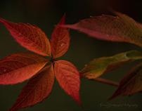 Warm Tones Of October.  Fine Art Nature Photography