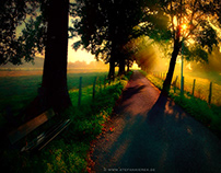 A bench in the morning