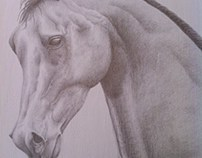 Horse Silverpoint Drawing