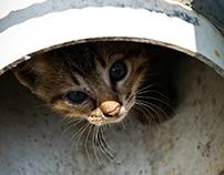 Photography - Cat