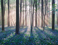 Among Bluebells (Märchenwald), Pt. I