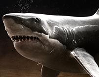 NBA (Tubarão) | África