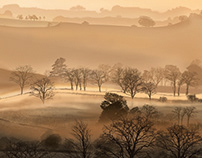 Malted Mist - (Not a photo)