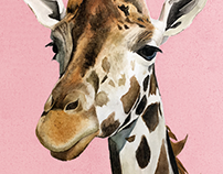 Safari Animal Illustrations