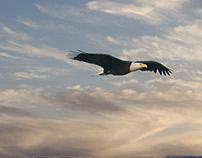 Flight and Light