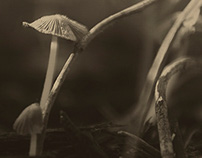 Pictorialism Mushrooms - study