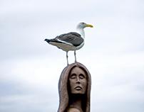 Seagulls - São Fransisco do Sul