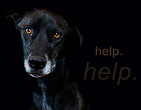 Alexandria Humane Society - Promotional Posters