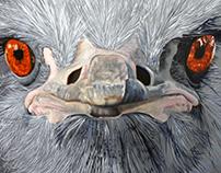 Ostrich - 2016