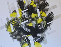 Australian Magpies Prints
