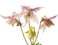 BloomingSpring