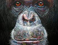 Chimpanzee - 2017