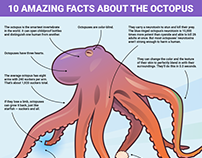 10 amazing facts about the octopus