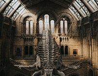 A walk at Natural History Museum, London.