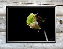 The Wildflower Collection | Art Photography