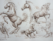 Horse ,pen drawing 295 x 420 mm
