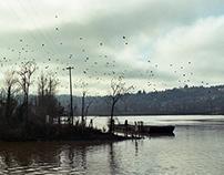 trees, birds, ice