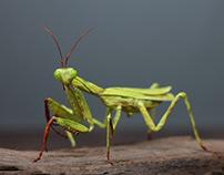 Mantis Religiosa Paper Sculpture (sold)