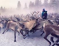Reindeer Herding 2016