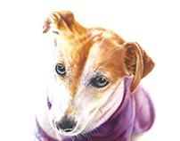 """Sweet dog """" CHINO """""""
