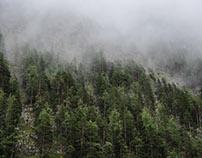Waldansichten