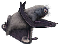 Pteros.com, the Online Pterosaur Encyclopedia