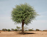 World Vision Mali