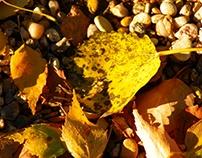 Barvy Listopadu