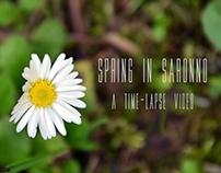 Spring in Saronno - Time Lapse Video