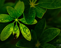 Green Water Crystal