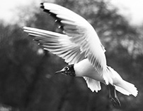 London 2016 - Seagulls