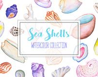 Sea Shells Watercolor Clipart