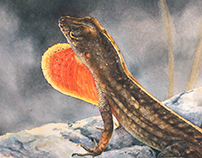 Brown Anole - Watercolor