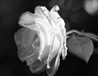 """Portraits of """"Daily Nature"""" 1- B&W"""