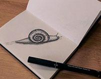 Snail draw