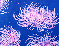 Chrysanthemum Studies