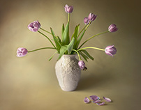 Lilac Tulips