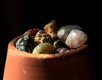 I love shells !!